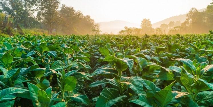 گیاهانی که در برابر سرما مقاومت می نمایند