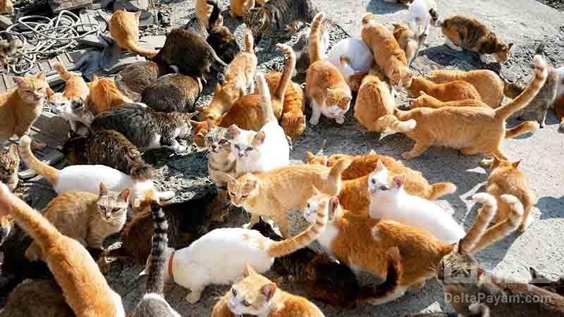 جزیره گربه ها ؛ بهشتی برای دوستداران گربه