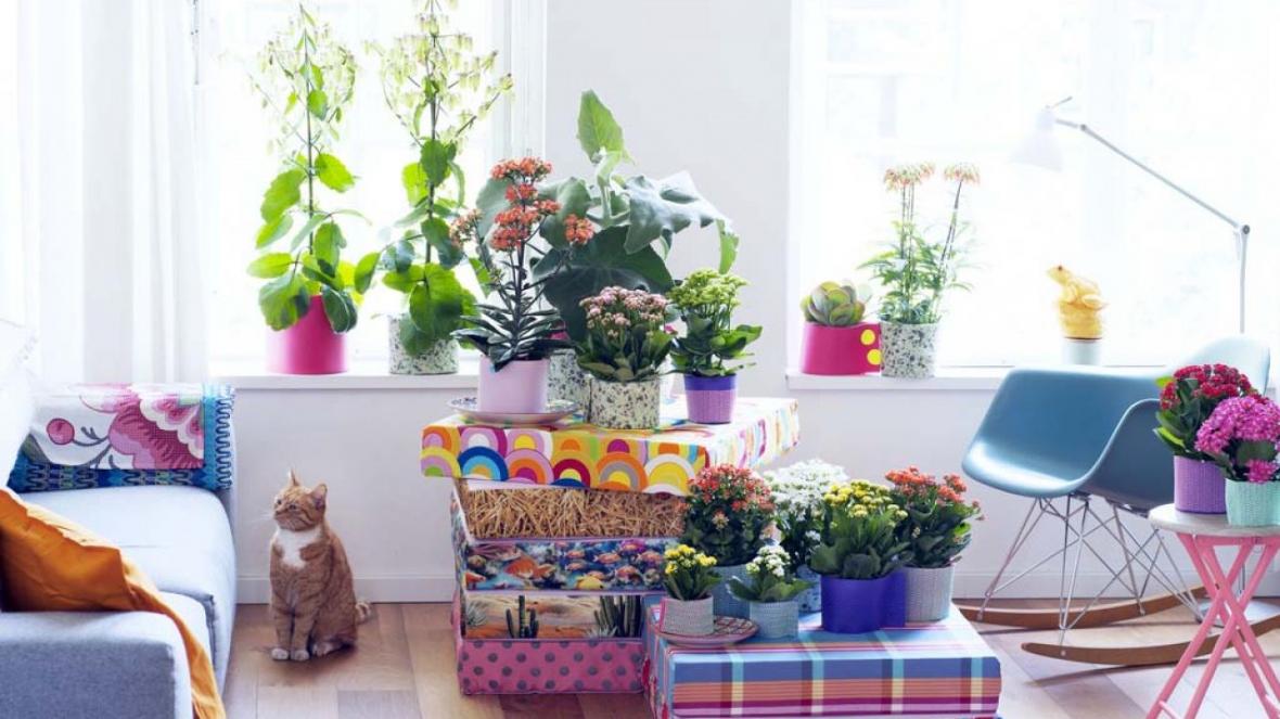 گیاهان خوشبو برای پرورش در داخل خانه