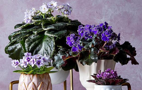 17 گیاه آپارتمانی بسیار زیبا که نمی توانید از آن ها چشم بردارید